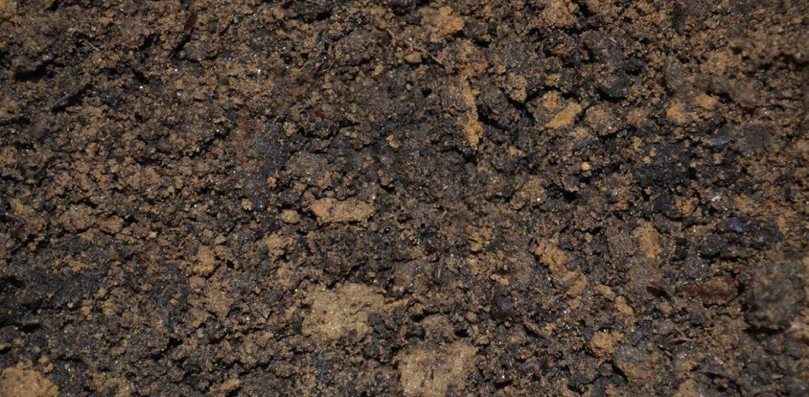 PFAS-grond